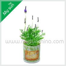 Tin can flower planting,Tin can flower planting,lavender flower seeds