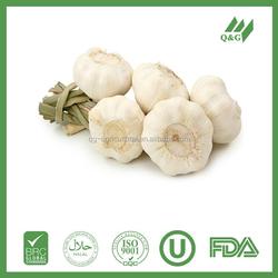 Organic vegetable fresh hybrid garlic