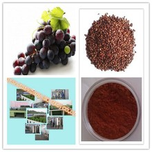 Antioxidant/ plant extract /Grape seed extract Proanthocyanidins powder