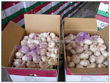 2015 of Shandong Garlic New Crop Garlic Red Garlic