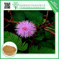 High quality Sensitive plant Herb Extract/mimosa hostilis powder/mimosa pudica powder