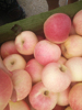 2015 fresh shandong local Gala Apple