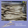 Sea Frozen Bonito Fish Wholesale Products lot number#kml4743