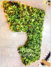 Flores artificiais e planta grama parede / empresa de moda artificial decorativa modelagem decoração