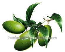 Olive Leaf Extract Powder 10%-20% Oleuropein