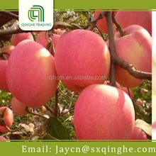 wholesale china fuji apple fruit price