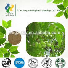 High quality Olive Leaf Extract Powder,Oleuropein 25%,Free sample