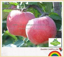 sweet qinguan apple