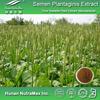Asiatic Plantain Extract,Asiatic Plantain Extract Powder,Asiatic Plantain P.E.4:1~20:1