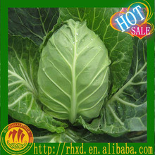 2015 fresh no soil/no fleck /no stain cabbages on sale