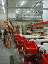 living pig slaughtering equipment for v type pre-dehiding conveyor