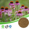 german echinacea extract polyphenols natural echinacea purpurea herb extract polyphenols 4% echinacea extract polyphenols