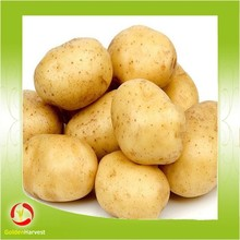 Good Quality Potato Fresh Potato Factory Price In China