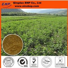 100% natural Licorice Root Extract,Glycyrrhiza uralensis for whitening effect