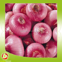 Onion seeds price/fresh onion/fresh red onion for sale