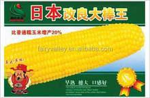 Amarillo híbrido ceroso dulce de maíz glutinoso semillas semillas de maíz para la siembra- japonés mejorado de grano grande rey