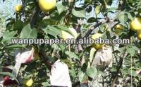 Pear fruit protection paper bag
