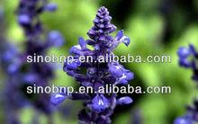 China 100% Natural Salvia Root Extract