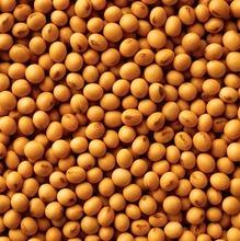 Soya bean