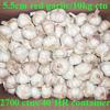 5.5cm fresh red garlic packed in 10kg carton