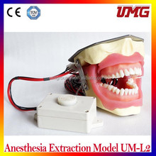 Top selling teaching materials dental Anesthesia Extraction Model