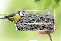 Window Bird Feeder With Sucion Cups For Observing Birds