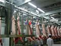 Novo 2015 de usados Pig equipment matadouro ou porco matadouro máquinas