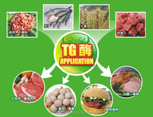 tg enzyme & safe enzyme & improve food water retaining capacity
