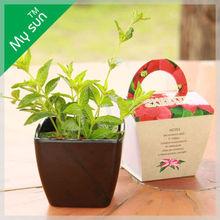 Mini plant, Plastic plant pots,House decoration plant.