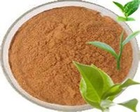 GMP ISO certificated factory supply Top quality natural Camellia Sinensis Leaf extract
