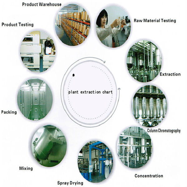 Factory Supply Lot Stock Non GMO And GLUTEN Free Diced Aloe Vera Extract
