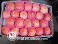 maçã fresca variedades de maçãs