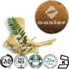 High Quality Plant Extract longifolia Jack Tongkat Ali P.E. Long Jack extract