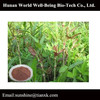 High quality Tiger Stick Extract / dried Root Polygonum cuspidatum Sieb Resveratrol / Giant Knotweed Root Powder Resveratrol