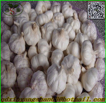 2015 china fresh red garlic price/New Fresh Garlic