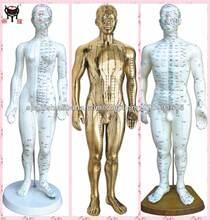 la acupuntura modelo de cuerpo humano