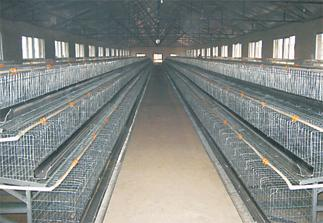Factory Produce Animal Cages / mink cage