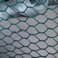 Hexagonal wire mesh/poulet de compensation