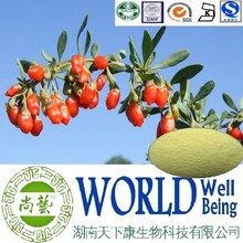 Hot sale Wolfberry extract/Lycium Chinense Mill extract/Enhance sexual plant extract
