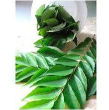 Fresh Sri Lanka Curry Leaves
