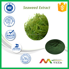 NSF-cGMP factory supply natural health care product Seaweed Extract