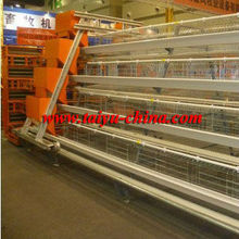 Taiyu chicken cage for farming (full poultry equipment and own oversea agent)