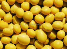wholesale 2014 northeast china new crop Non-GMO soya beans. hot sale soya beans