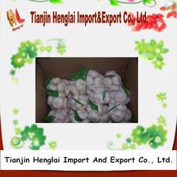 fresh white garlic for sale at good price 1