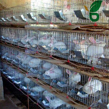 galvanized stainless steel rabbit cages with auto drinker and feeder