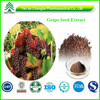 High Quality Grape Seed Extract 100% Natural Proanthocyanidins P.E.