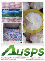 china wholesale garlic price