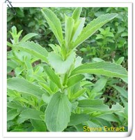 calorie free stevia leaf extract powder