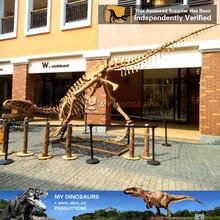 MY-DINO resin dinosaur fossil skeleton replica for sale