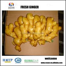 Fresh ginger of china